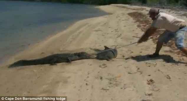 pescador golpea a cocodrilo