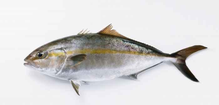 pez limón, un agente propagador de la ciguatera
