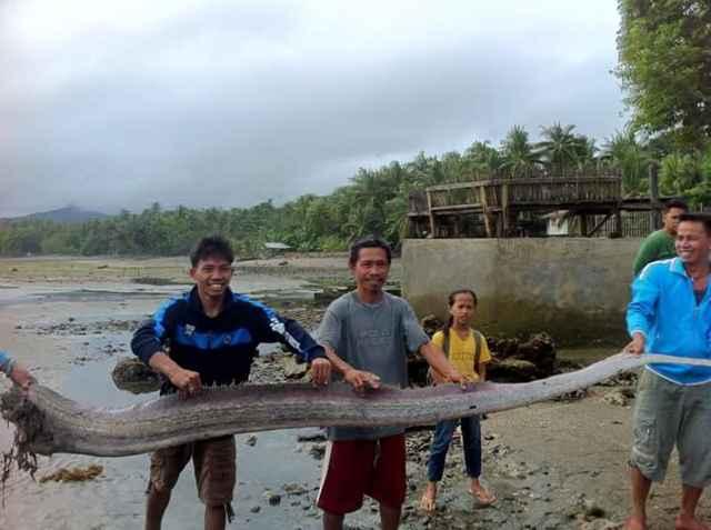 pez remo gigante encontrado en Filipinas