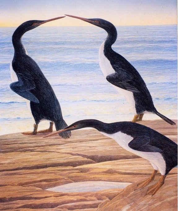 pinguino de Waimanu