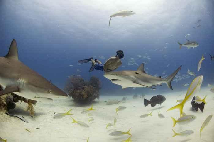 Rob Stewart entre tiburones
