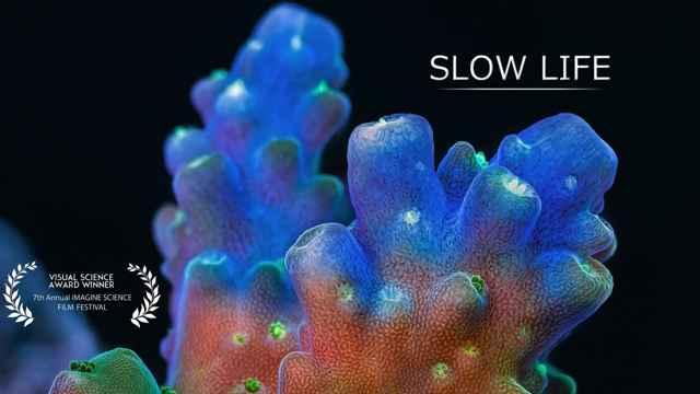 slow life, vida lenta