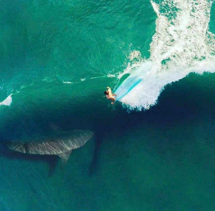 tiburón y surfista con Photoshop