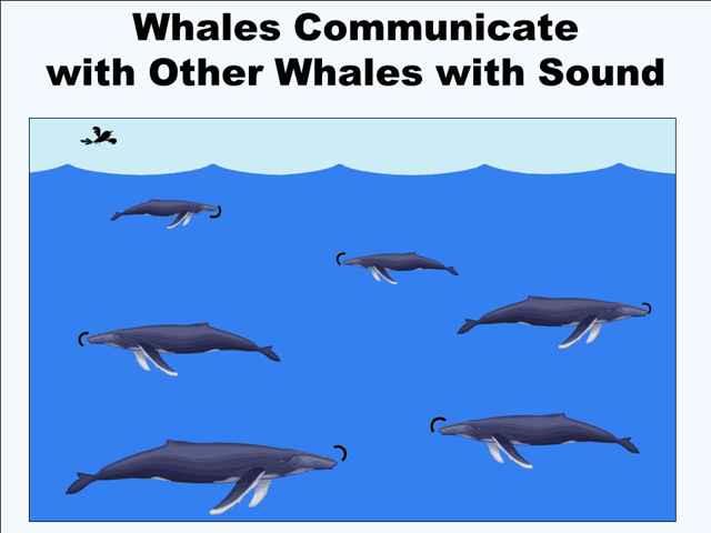 comunicación entre ballenas