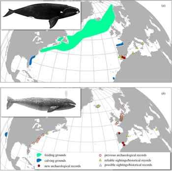 distribución de la ballena franca