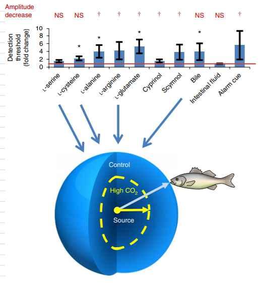 efecto del CO2 en el olfato de los peces