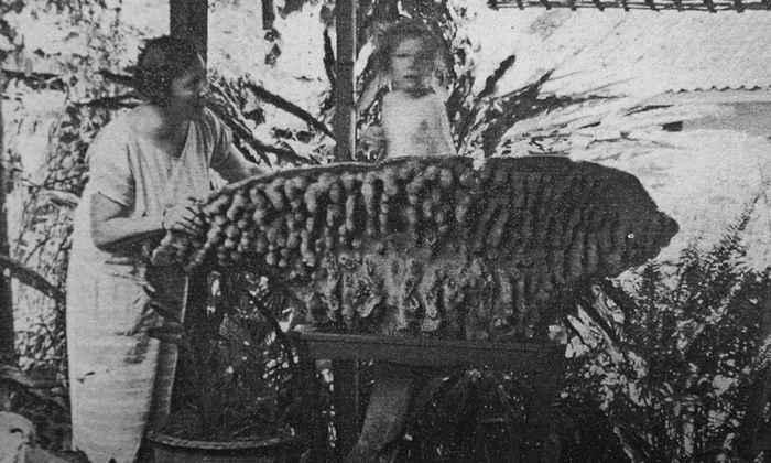 imagen de un esponja copa de Neptuno en 1925