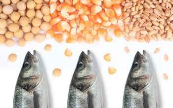 pienso para peces