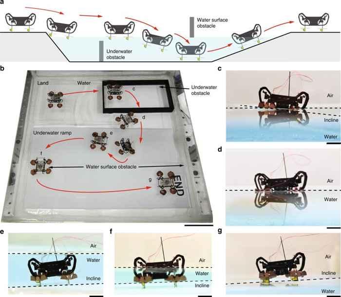 robot cucaracha HAMR, entrada y salida del agua
