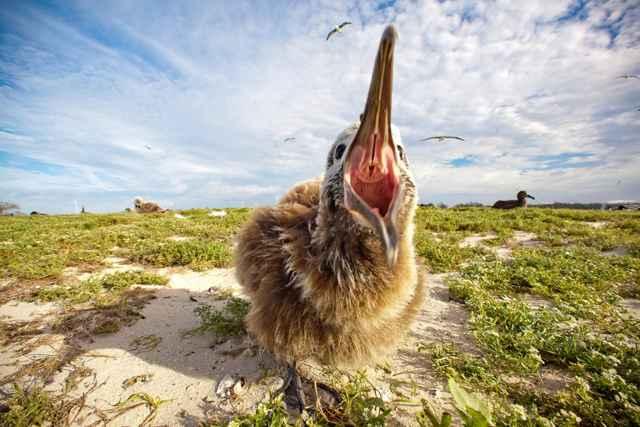 ave de isla