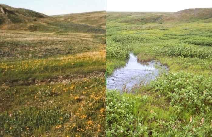 cambios en la vegetación del Ártico