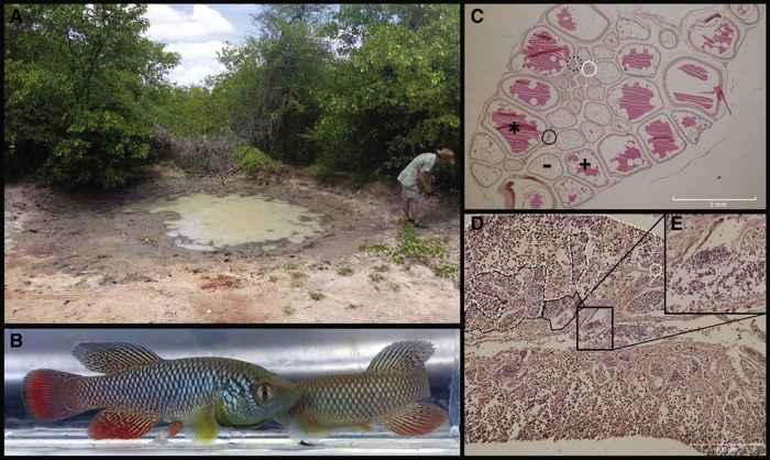 charca en África hábitat del Nothobranchius furzeri