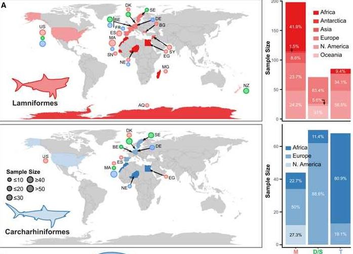 distribución de carcharhiniforms y lamniformes