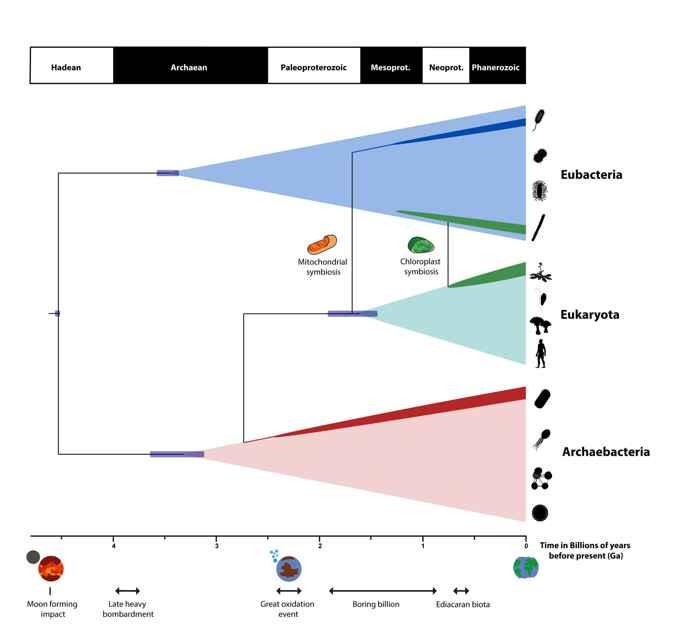 escala de tiempo de la vida en la Tierra