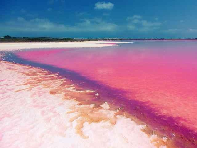 marismas salobres rosadas