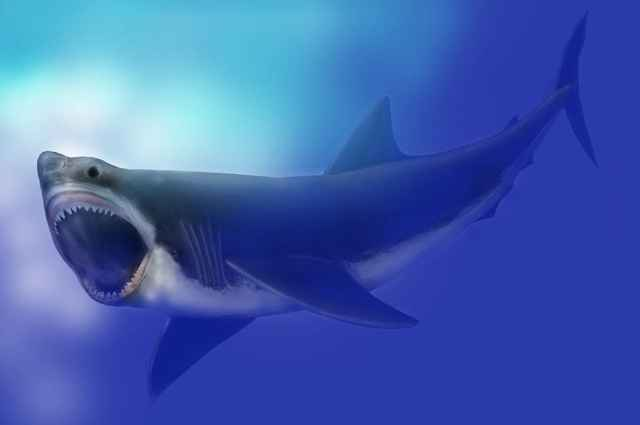megalodon (Carcharodon megalodon)