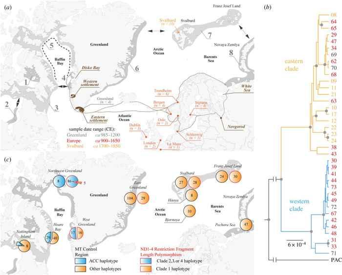 distribución de morsas alrededor de Groenlandia