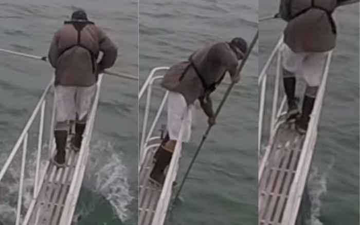 tiburón blanco ataca a un cientifico