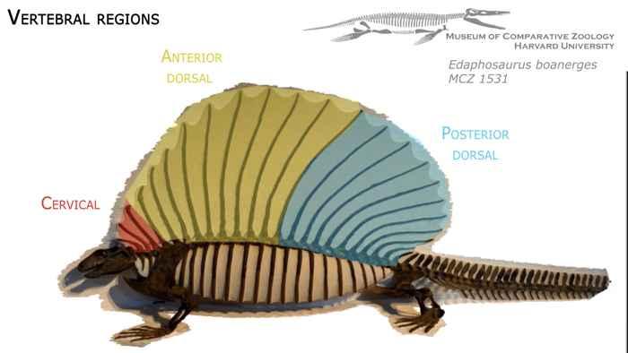 regiones primitivas del Edaphosaurus