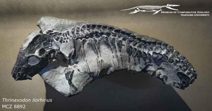 Thrinaxodon fósil