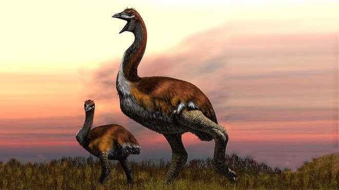Vorombe titan, el ave más grande de la historia