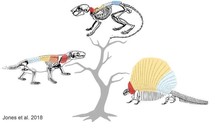 árbol filogenético de la columna vertebral