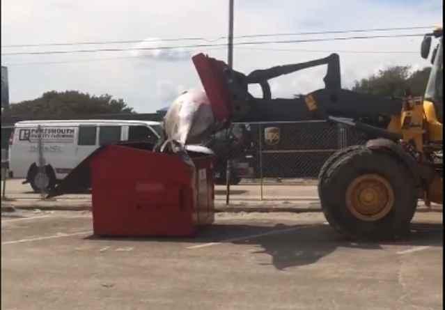 ballena es depositada en un contenedor