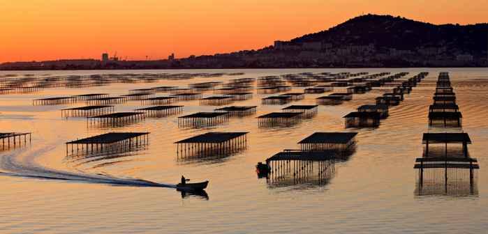 bateas en el lago Thau