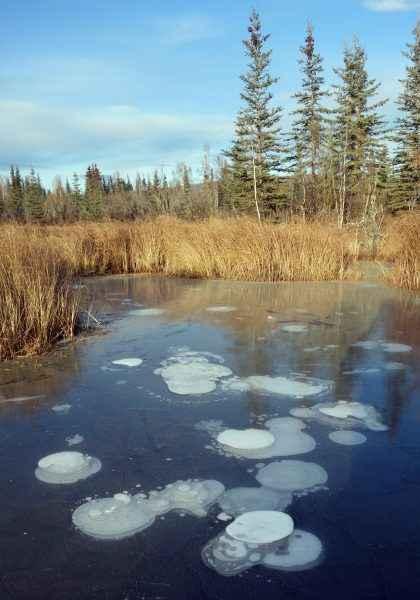 burbujas de metano en un lago de Alaska