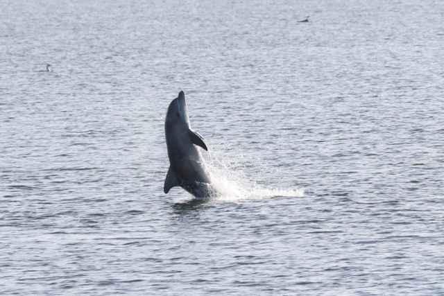 delfín caminado sobre la cola