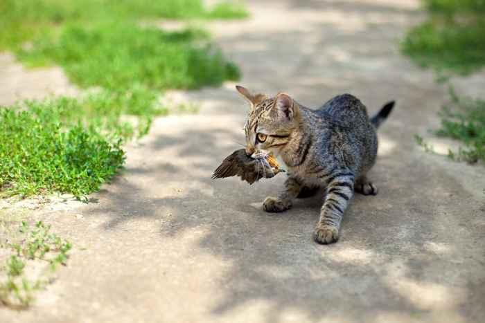 gato caza un pájaro
