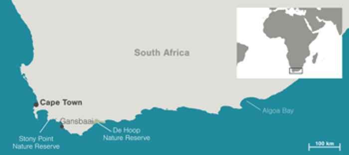 mapa de la recolocación de los pingüinos