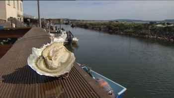 ostra de la laguna de Thau, Francia