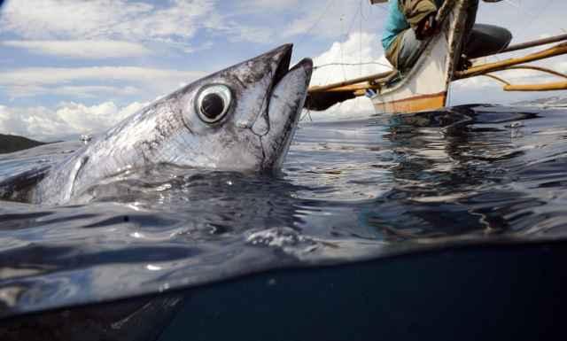 pesca de un atún en Filipinas
