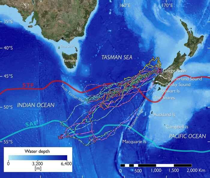 migración del pingüino Tawaki