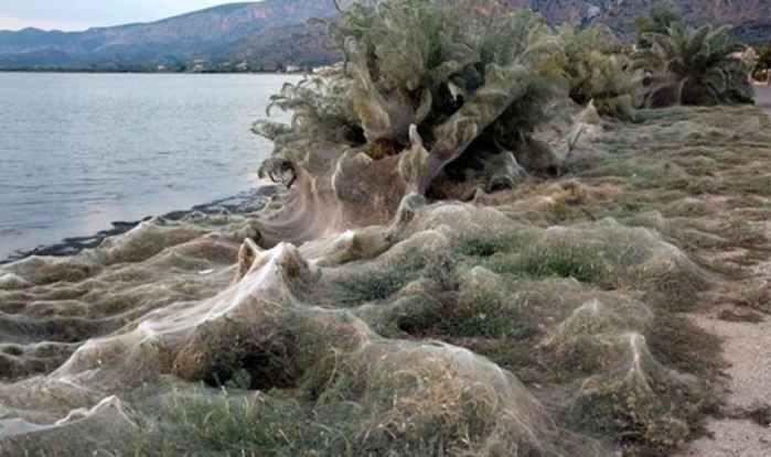 tela de araña en la costa de Grecia