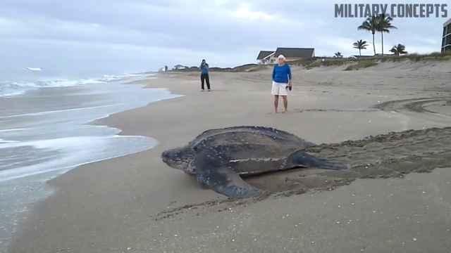tortuga laúd gigante