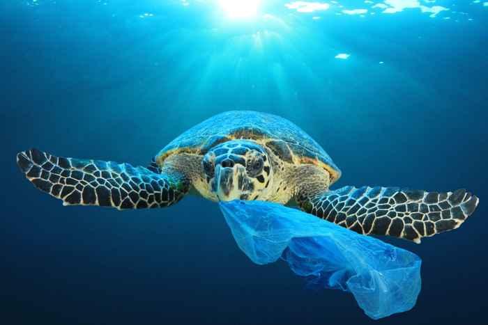 tortuga marina come plástico