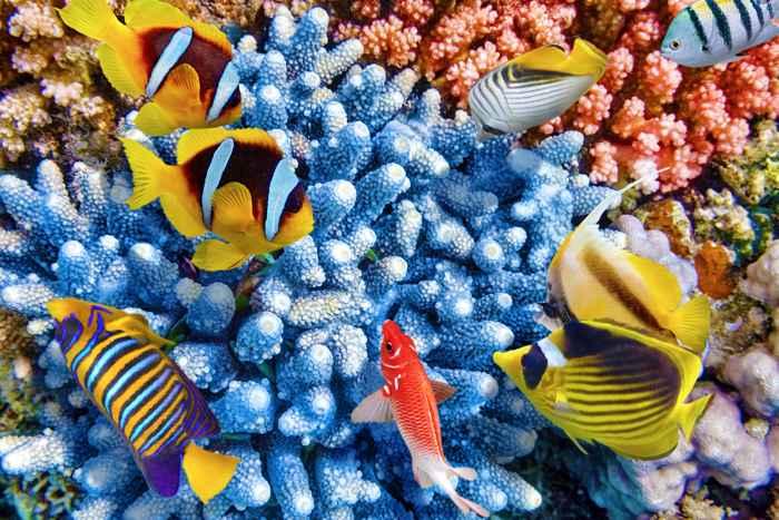 biodiversidad en Áreas Marinas Protegidas