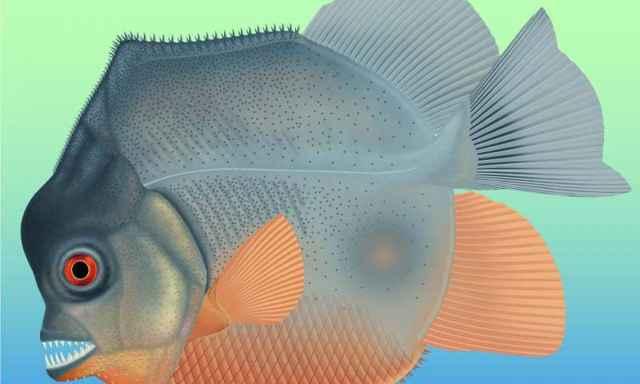 Piranhamesodon pinnatomus