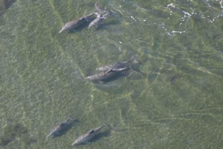 delfines combaten enfermedades