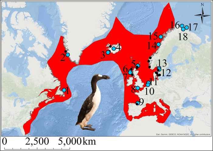 distribución del alca gigante (Pinguinus impennis)