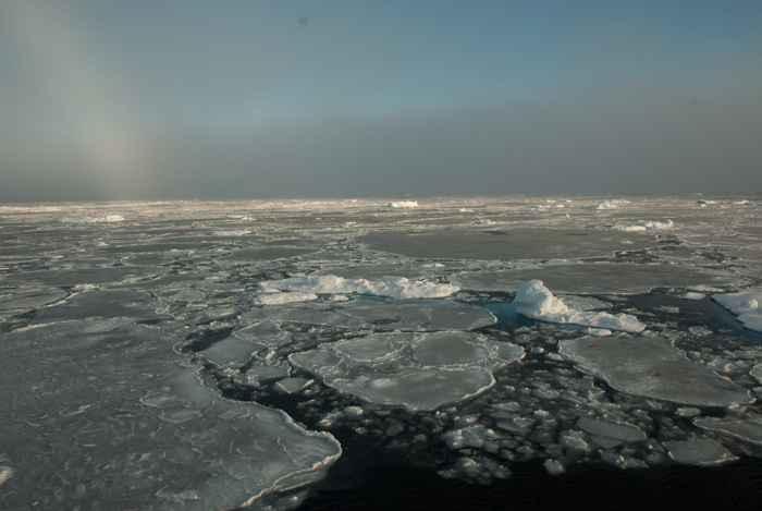 fusión del hielo marino delgado