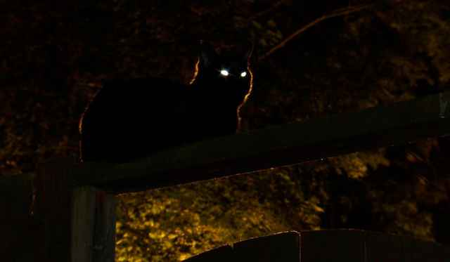 ojos de gato en la oscuridad