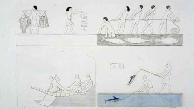 piscicultura en Egipto