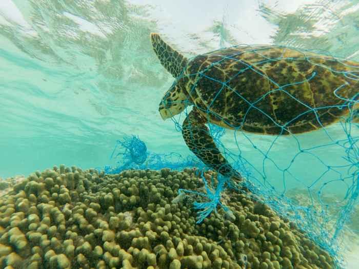 tortuga marina enredada