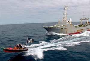 Un zodiac de Sea Shepherd ostiga al Kukuyoshi Maru-n68
