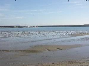gaviotas bocana del puerto, playa sur Peñíscola
