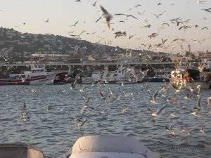 gaviotas en el puerto de Peñíscola