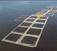 granja de acuicultura